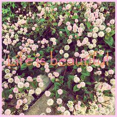 #PicoSweet #app #flower #gardening #ガーデニング