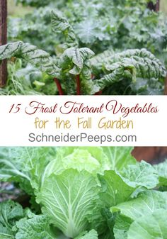 Just because it's cold doesn't mean gardening is over. Here is a list of 15 frost tolerant herbs and vegetables and how much cold they can…