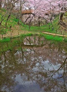 395:「公園内の池の水面に桜や橋が映り込み 上下対称の光景が素敵でした。」@高遠城址公園