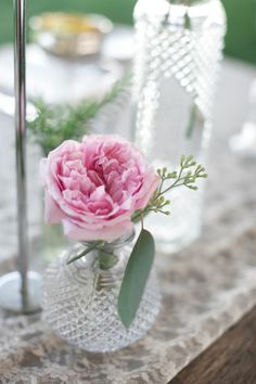 Single pink bloom in a glass vase