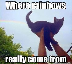 Where rainbows really come from.