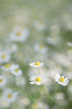 untitled by rosemary* on Flickr ✿⊱╮