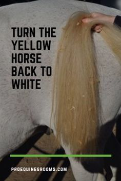 Pro Equine Grooms - Grooming the Yellow Horse Back to White