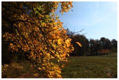Photo by me. Photo: Diána Rigó - Normafa - Budapest, in the fall of 2013 #budapest #hungary #photography #fall #normafa #autumn