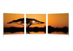 Savannah Sunset Mounted Photography Print Triptych
