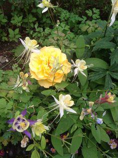 Our garden 2013