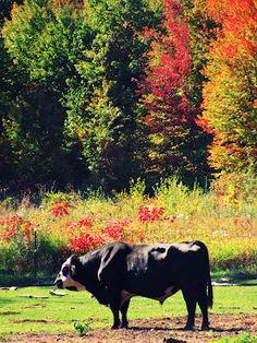 In My Wild Eden- Autumn Bull