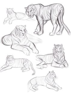 I don& feel like I share my sketches enough, or for that matter sketch enough, so to remedy this here are some tigers (& tigers are awes. Big Cats Art, Furry Art, Cat Art, Tiger Sketch, Cat Sketch, Animal Sketches, Animal Drawings, Cat Drawing, Drawing Sketches