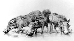 wildlife africa drawings - Buscar con Google