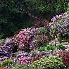 Parco naturale in Piemonte - La Conca dei Rododendri in fiore nell'Oasi Zegna, in Piemonte prealpi biellesi