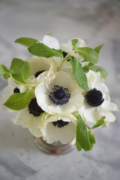 Petite Flower + Herb Arrangements: small, one-flower arrangements and adding in herbs for a nice contrast and invigorating scent. {white anemone and mint} Watercolor Clipart, Watercolor Flower, Fresh Flowers, White Flowers, Beautiful Flowers, Simple Flowers, Ikebana, Gerbera, White Anemone