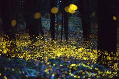 Long exposure photos reveal beautiful world of fireflies. Okayama-based photographer Tsuneaki Hiramitsu has taken shots of fireflies for years, often going out of the city and into dark, wooded areas where the fireflies reside. His process in capturing the yellow dots involves shooting 8-second long exposure photos, then stitching the images together to achieve the dreamlike scenes.