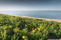 Spring in Crimea  Maksim Kutashev