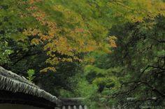Konchi-In temple, Kyoto Zen Garden ©alexander h. schulz