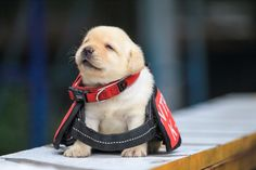 Cute puppy from Taiwan police