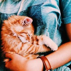 // paws 'n' whiskers // animals // cats // cute Crazy Cat Lady, Crazy Cats, I Love Cats, Cute Cats, Funny Cats, Adorable Dogs, Siamese Kittens, Kittens Cutest, Cats And Kittens