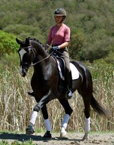 Flashy imported four-year-old Oldenburg mare of top quality and great rideability. Competitive for a pro but also suitable for an AA or Junior. Schooling 1st with FEI YH class potential. In full training. $65,000