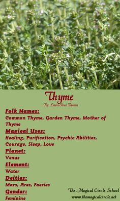 Thyme Magical Properties - The Magical Circle School - www.themagicalcircle.net