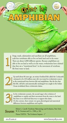 What is Amphibian?  #amphibian #biology #evolution #infography #scientific