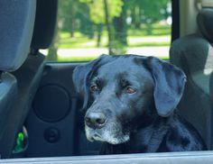 Sad dog awaits owner,