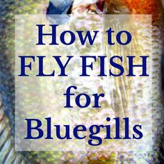 How to Fly Fish for Bluegills Bluegills aren't the biggest or most glamorous fish to catch with a fly rod, but when you fish for them, the fundamentals are still touched: rigging your equipment, readi Crappie Fishing Tips, Fly Fishing Tips, Fishing Rigs, Bass Fishing, Ice Fishing, Fishing Tackle, Crappie Lures, Survival Fishing, Fishing Books