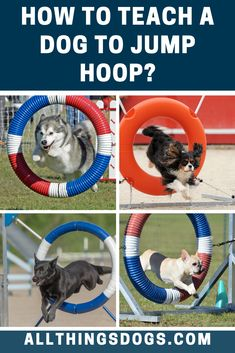 With the Jump hoop dog trick, you can teach your dog to to jump through a Hoop (this is suitable for dogs over 1 year of age). Read our simple step-by-step instructions on how to teach a dog to jump hoop. Agility Training, Brain Training, Dog Agility, Dog Trick, Husky Breeds, Verbal Cues, Relay Races, Dog Hacks, 1 Year Olds