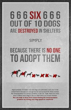 6 out of 10 dogs are destroyed in shelters simply because there is no one to adopt them. #spay #neuter