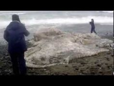 """Amazing """"Dragon"""" Footage (REAL Monsters & Demons?) - YouTube"""
