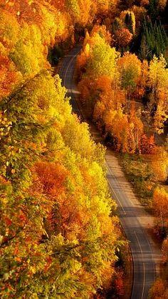 Autumn Road.. | Flickr - Photo by Lee Teng Mei (李 騰媚)