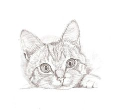 Kitten sketch black and white realistic pencil drawing/pet