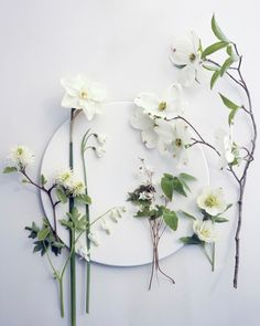 white flower specimens lined up on white seamless and plate/shape