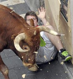 san firmino pamplona - Cerca con Google Pamplona, Taurus, Cow, Moose Art, Lion Sculpture, Statue, Animals, Google, Animales