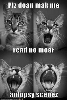 a cat meme!