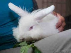 Linney is Rabbit Wranglers alum who is available for adoption from the Western PA Humane Society. Read all about her at this link!