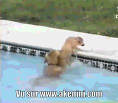 Akenini.com - Mini animations drôles - Funny gif animated