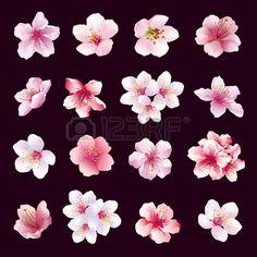 Ensemble de différentes belles fleurs de cerisier isolé sur fond noir. Big collection de rose violet blanc sakura fleur de cerisier japonais. Éléments de conception de printemps fleuri. Vector illustration. Banque d'images - 40770532