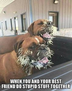 21 Funny Pictures Of The Day #dogsfunnypuppies