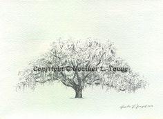 Savannah Candler Live Oak Tree Pen and Ink Sketch by theinklab, $30.00