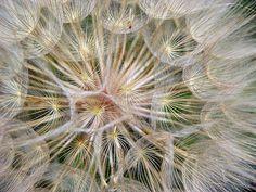 Flower architecture   Flickr - Photo Sharing!