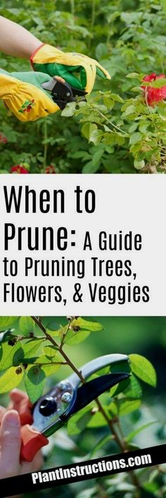 We've compiled a pruning guide which will tell you exactly when to prune and why! Of course every plant is different, so this is just a general guide that will apply to most plants!  #FlowerGarden