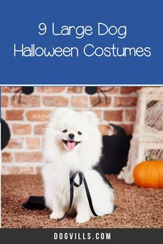 Dress your dogs (even your Great Dane) in one of these Large Dog Halloween Costumes For Boy Dogs. Dog Halloween Costumes, Boy Costumes, Large Dogs, Small Dogs, Cute Dog Collars, Diy Dog Toys, Boy Dog, Dog Training Tips, Dog Accessories