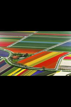 Amsterdam, Tulip fields