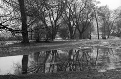 2014_Feb_Töölönlahti_Nikon-FA_Nikkor-50mm_Adox-CHS-25__007