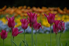 If you have flowers clearly in the foreground, try blurring the background to draw focus.
