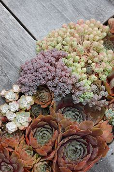 Sempervivums and other succulents in a table crevice garden.