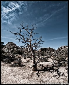 Photograph taken in Joshua Tree National Park in California.