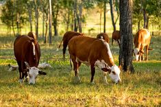 Grass Fed Beef Can SOLVE Global Warming | Small Footprint Family