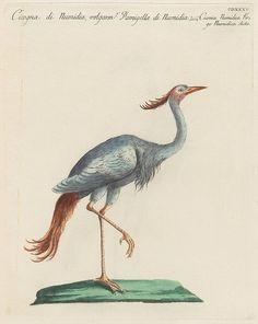 4 of Saverio Manetti's treatise on birds from 1776 : 'Storia Naturale Degli Uccelli Trattata . Vintage Bird Illustration, Fish Illustration, Vintage Birds, Stork, Bird Watching, Botanical Art, Bird Art, Natural History, Landscape Art