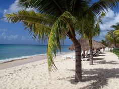 Here's where you can find me in October!!   Cozumel -Mexico