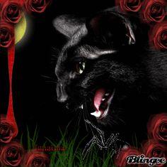 gato gotico
